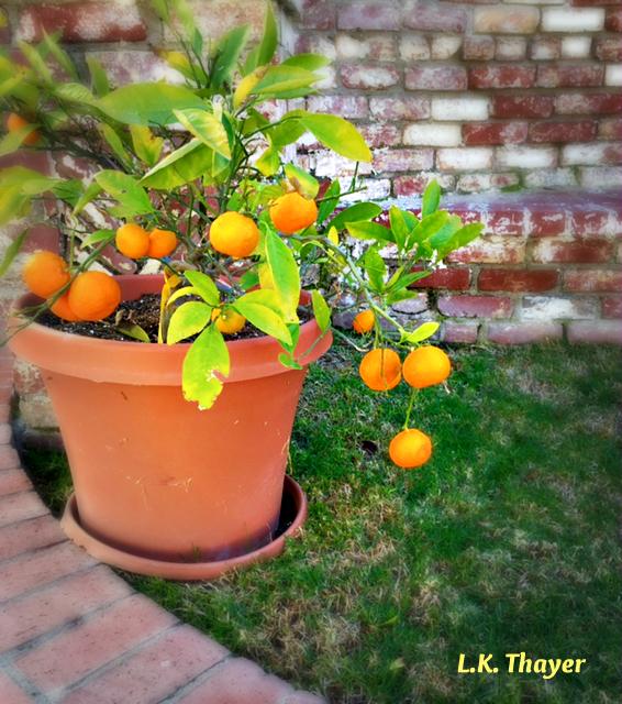 lemons bricks