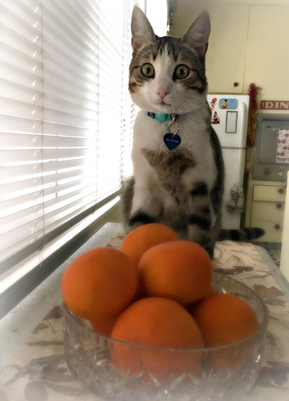 SR Oranges